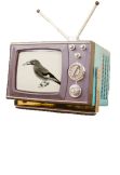 maglietta BIRD ON TV