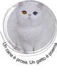 maglietta white cat