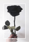 maglietta Black Rose.