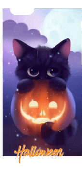 cover Halloween Cat / Cover