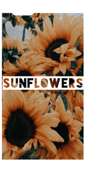 cover Sunflower Cover