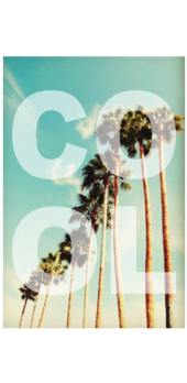 cover PalmTrees