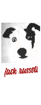 cover jack russell
