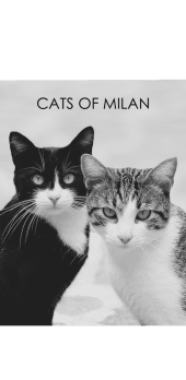 cover Cats of Milan