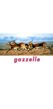 cover GAZZELLE
