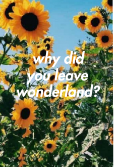 maglietta Girasoli - Why did you leave wonderland?